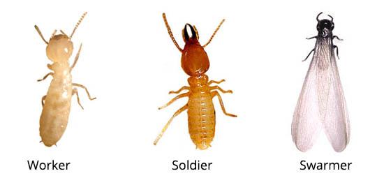 Termite Control in Midrand