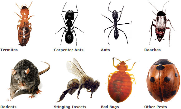 Pest Control in Roodepoort