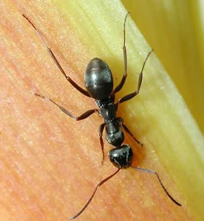 Ant Control in Link side
