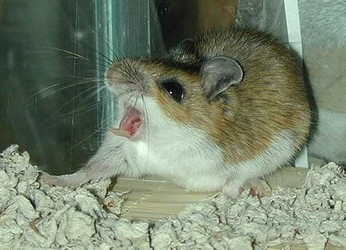 Mice Control in Nelson Mandela Bay
