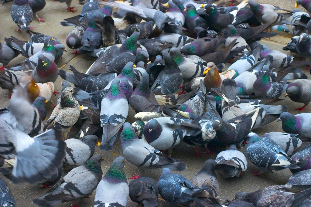 Pigeon Proofing in Amsterdam hoek
