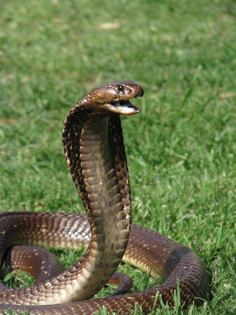 Snake repellent in Algoa park