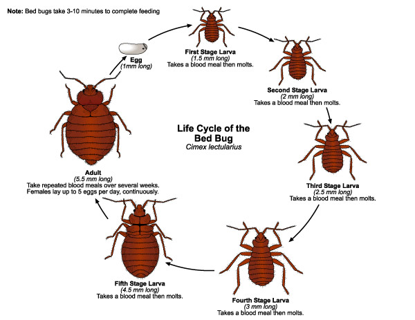 Bed Bug Control in Cape Town