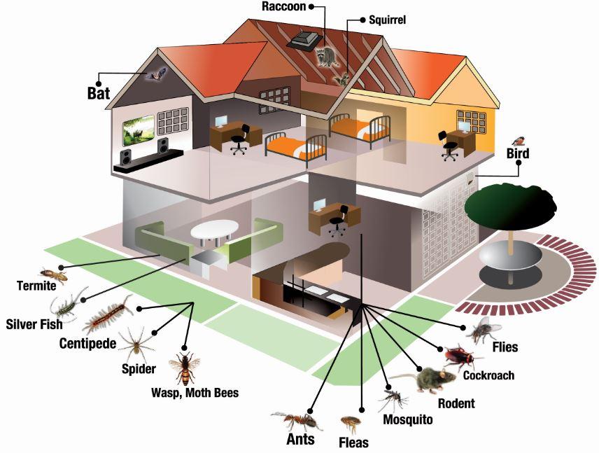 Domestic Pest Control in Cape Town