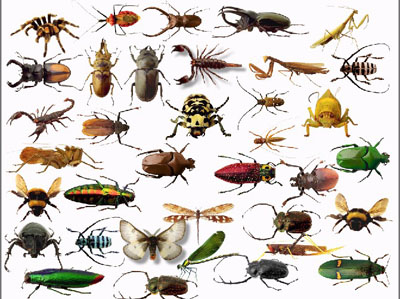 Insect Control Cape Town 187 Tel 061 293 6998 187 Cape Town