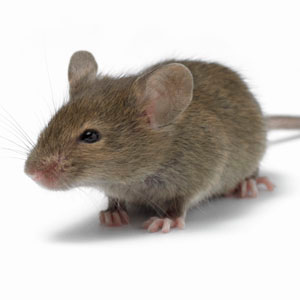 Mouse Control in Cape Town