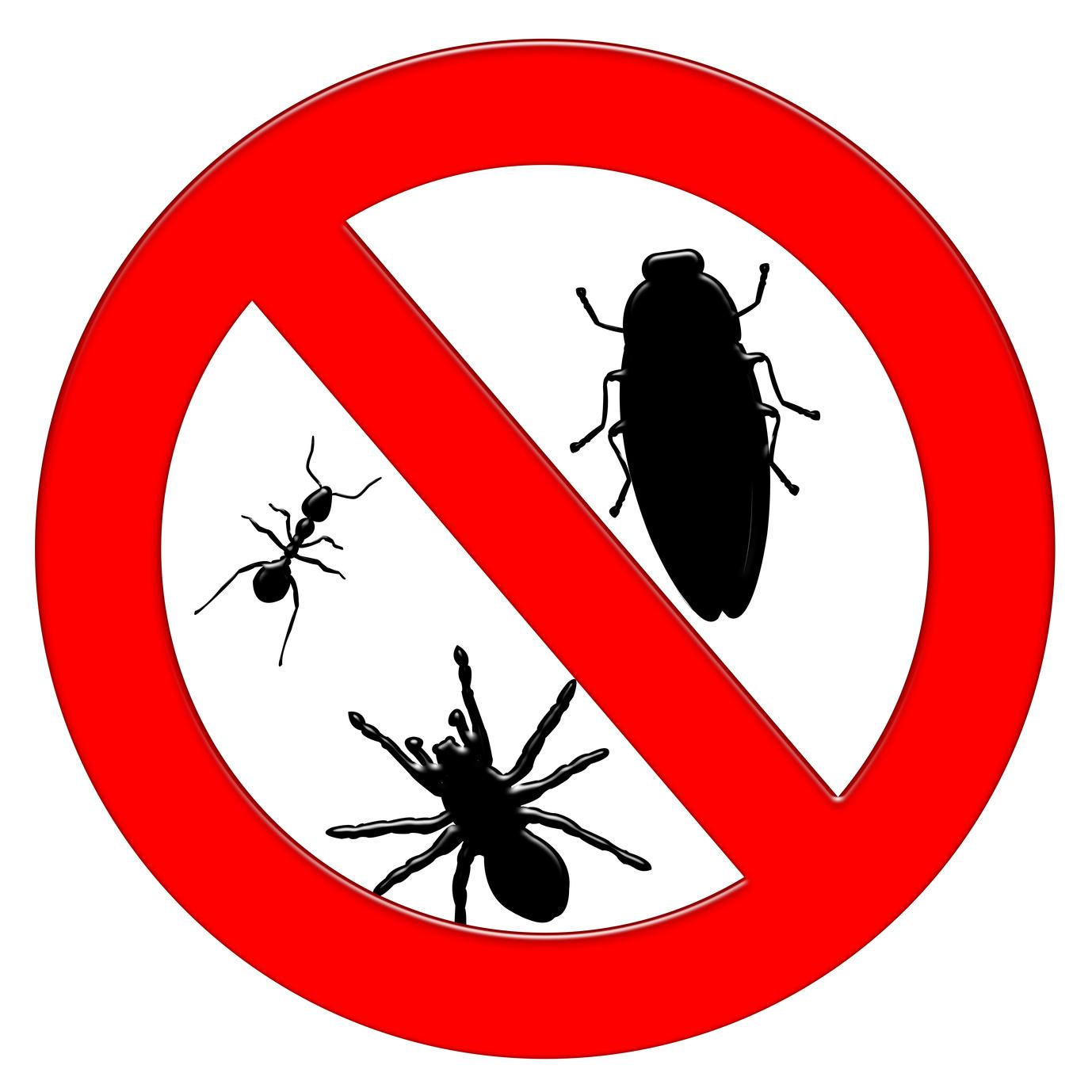 Pest Control in Cape Town