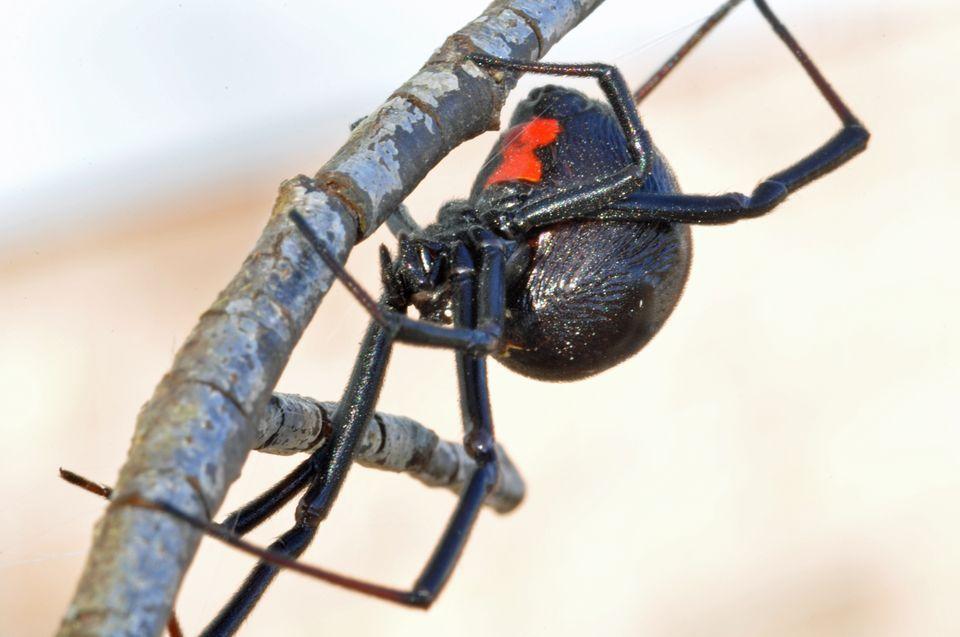 Spider Control in Cape Town