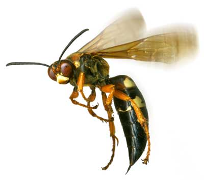 Wasp Control in Cape Town